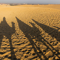 Egypt, Cairo, Tourists on camel safari cast shadows in Sahara Desert near Great Pyramids of Giza at sunset