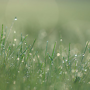 &quot;Feeling Fresh&quot;<br /> <br /> All sprinkled with fresh morning dew makes this nature abstract a lovely refreshing green and light filled image!