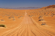 The road leading to Al Wasil in Wahiba Sands (Ramlat al Wahaybah) in Oman.