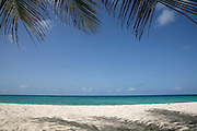 There are many beautiful spots to visit in Barbados along the coast.  From the rugged North Point to calm idealic West Coast and freshness of the South. All have their own natural beauty and must be seen. <br /> BEACH, COCONUT PALM &amp; SHADOW, BARBADOS