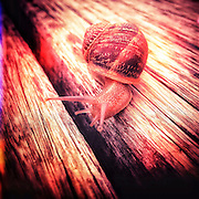 Snail on wooden path in red glow