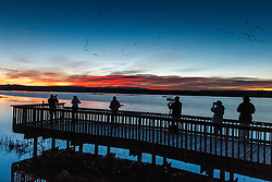 Photographser on boardwalk, Bosque del Apache National Wildlife Refuge, New Mexico, USA.