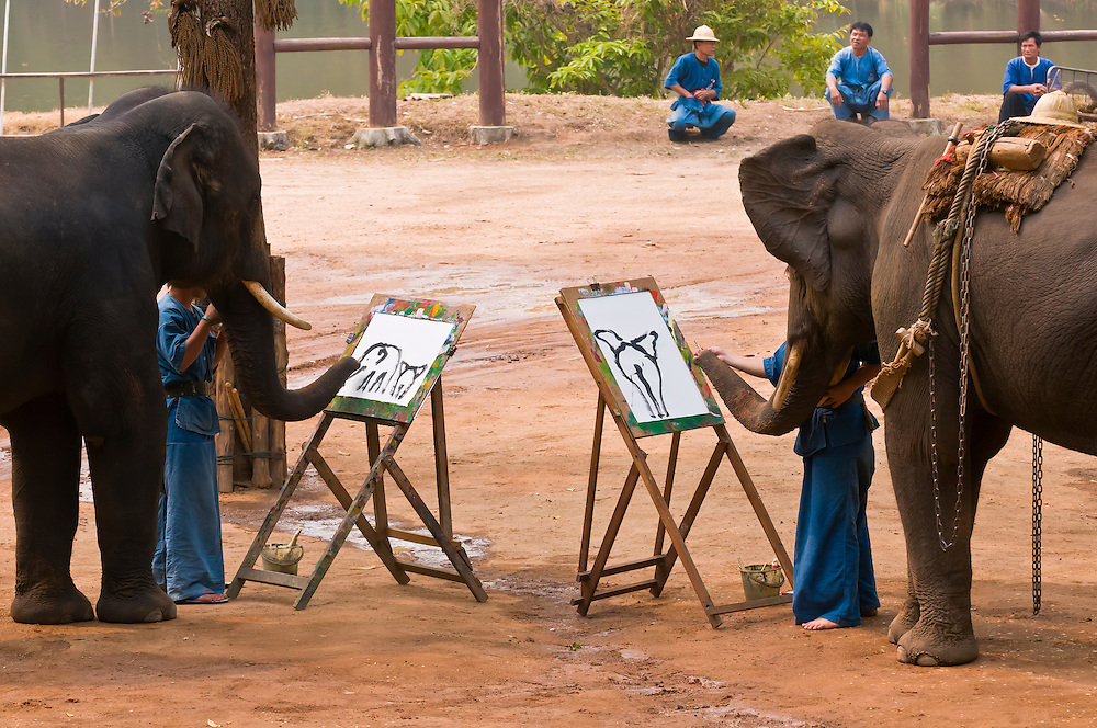 Elephants painting pictures, Thai Elephant Conservation Center (National Elephant Institute), Lampang, near Chiang Mai, Northern Thailand