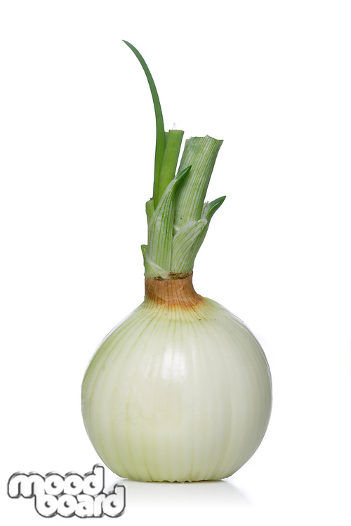 Close-up of onion on white background