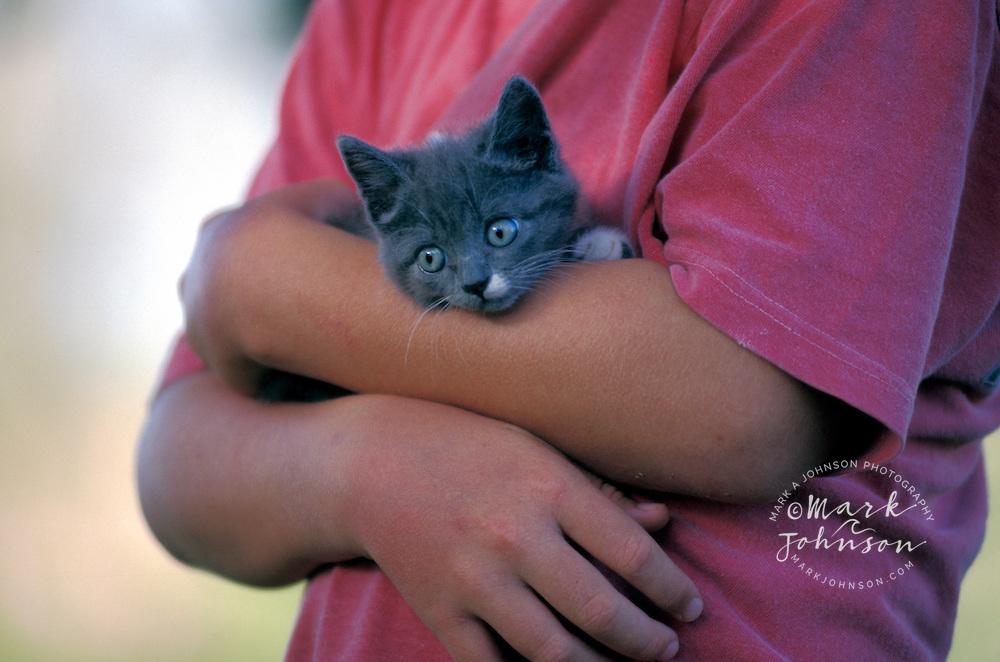 Australia, Qld., kitten in boy's arms