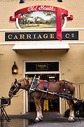 A sightseeing carriage horse outside the Old South Carriage barn in historic Charleston, SC.