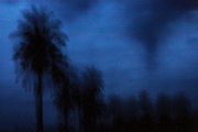 Palms seen at dusk as storm clouds gather over the Congo basin, in Yamgambi, DR Congo, on Sunday, Dec. 7, 2008.