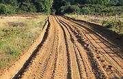 Sandy track crossing heathland, Sutton, Suffolk, England, UK