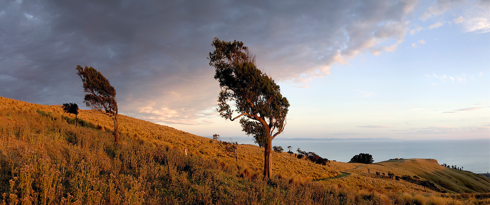 Panoramic view of trees and tussocks on the Port hills overlooking Sumner, Christchurch, New Zealand.