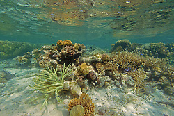 "A diversity of corals in ""The Aquarium"", Clerke Lagoon at the Rowley Shaols."