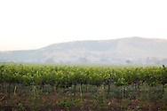 Nashik Wine Capital of  India<br /> COPYRIGHT 2010 CHRISTINA SJ&Ouml;GREN<br /> ALL RIGHTS RESERVED