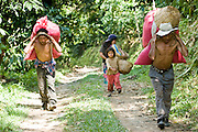 10 NOVEMBER 2004 -- TAPACHULA, CHIAPAS, MEX: Workers on a coffee plantation near Tapachula, Mexico, carry bags of harvested coffee to a waiting truck. Many coffee plantations in Chiapas rely on undocumented workers from Guatemala because their Mexican workers have either emigrated to the US or won't work for the wages plantation owners pay. The mountains of Chiapas, Mexico, make up some of the finest coffee producing land in Mexico. World coffee prices have been depressed by over production in Brazil and Vietnam and thousands of coffee farmers in Mexico and Guatemala have been forced to emigrate to the US as undocumented workers because of the crisis in the coffee industry. PHOTO BY JACK KURTZ