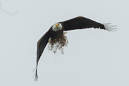 Bald Eagle Nest 2012 week 5
