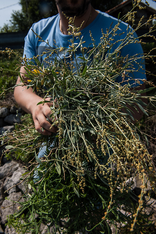 Venice - Herbs hervest in lagoon with Daniele Zennaro, chef at Vecio Fritolin Resytaurant and Gabriele.