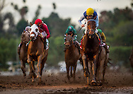 ARCADIA, CA - JANUARY 07: Blue Tone #1, ridden by Kent Desormeaux wins the San Gabriel Stakes at Santa Anita Park on January 7, 2017 in Arcadia, California. (Photo by Alex Evers/Eclipse Sportswire/Getty Images)