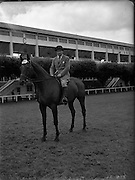 """05/08/1952<br /> 08/05/1952<br /> 5 August 1952<br /> <br /> RDS Horse Show<br /> <br /> Patrick J. Ball on """"Another Atom""""."""