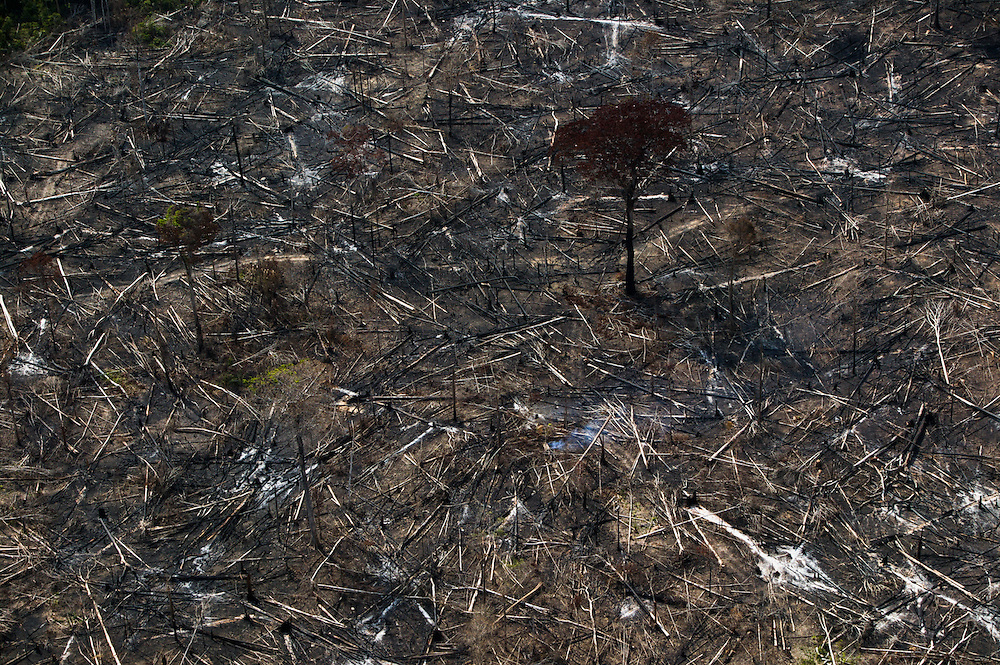 Dec. 9, 2003: Deforested land for cattle and soya plantations in Para State, Brazil. ©Daniel Beltra