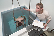 CUPERTINO, CA -  CIRCA 2010:  An athlete undergoes underwater hydrostatic body fat weighing in 2010 at an exercise physiology laboratory at De Anza College in Cupertino, California.  (Photo by David Madison/Getty Images) *** Local Caption ***