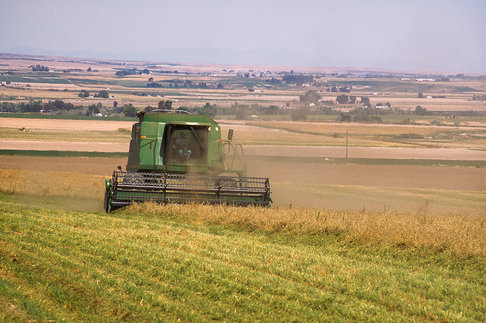 Oregon, USA - Combine in field harvesting alfalfa seed