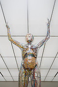 Deutsches Hygiene Museum Dresden, der glaeserne Mensch, Dresden, Sachsen, Deutschland.KEIN PROPERTY RELEASE! KEINE VERÖFFENTLICHUNG OHNE GENEHMIGUNG DES EIGENTÜMERS |.Dresden, NO PROPERTY RELEASE! ,  Deutsches Hygiene Museum, permanent exhibition, the transparent man