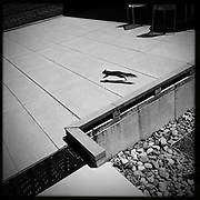 'Squirrel!&quot; <br /> <br /> A squirrel runs across the hot pavement on the Salisbury Campus.