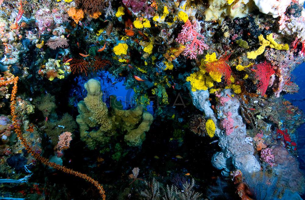 Coral outcrop 42m.Samal Island, Davao
