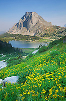 Mitchell Peak, Yellow Aster wildflowers in the foreground, Popo Agie Wilderness, Wind River Range Wyoming