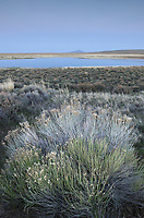 Moonrise over Paiute Lake and rabbitbrush, Hart Mountain National Antelope Refuge Oregon