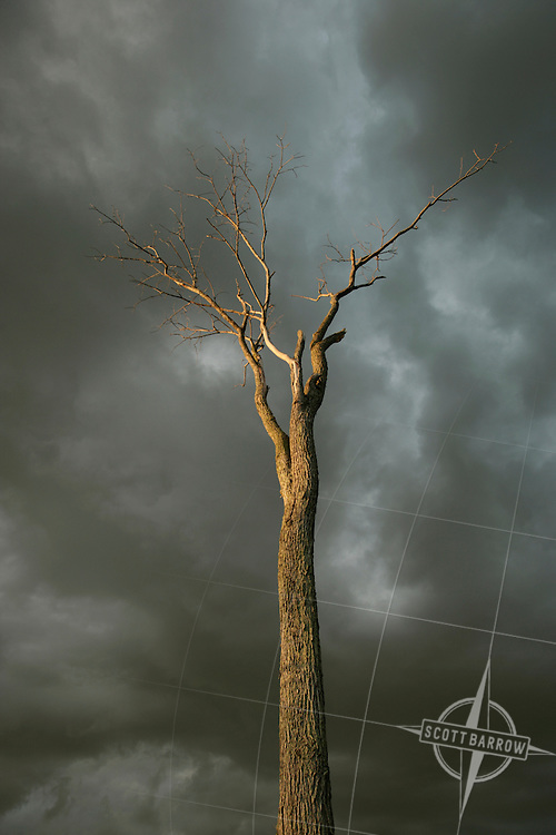 Dead tree with stormy sky