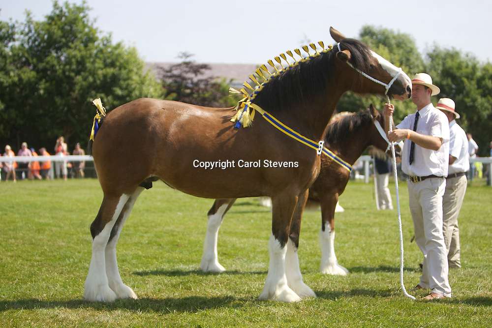 Mr M P Woof's 4 year old bay mare  Marieth Maizie with bay filly foal Marieth Michaela by Redbrae Mascot<br /> s  Marieth Major<br /> <br /> 1st  Brood Mare Class<br /> 1st  Foal Class