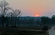 Game drive during sunrise in Kanha National Park, Madhya Pradesh, India.