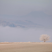 Tree with frost with mist and hills in the background. Billom, Auvergne,France