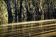 Wildlife refuge south of Parkes, N.S.W. Australia. Australian Dinosaurs.