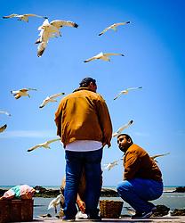Fishermen in Essaouira, Morocco<br /> <br /> (c) Andrew Wilson   Edinburgh Elite media
