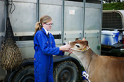 © Licensed to London News Pictures.29/07/15<br /> Borrowby, UK. <br /> <br /> A young girl prepares her calf before competition begins at the Borrowby Country Show and Gymkhana in North Yorkshire.<br /> <br /> Photo credit : Ian Forsyth/LNP