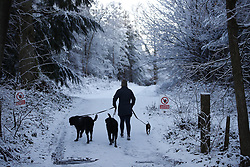 © Licensed to London News Pictures. 30/01/2019. Sevenoaks, UK. A woman walks her dogs near Sevenoaks as snow hits the south east for the first time this winter. Photo credit: Peter Macdiarmid/LNP