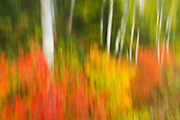 Motion study of autumn scene<br /> Algonquin Provincial Park<br /> Ontario<br /> Canada