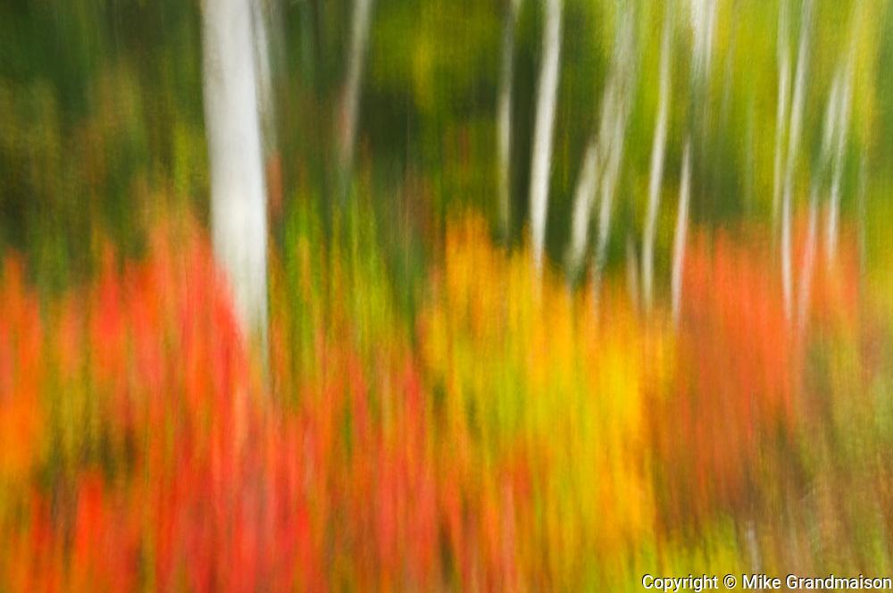 Motion study of autumn scene<br /> Algonquin Provincial Park<br /> Ontario<br /> Canada