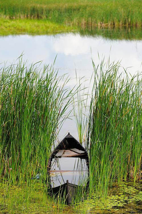 Sunken boat, Crisan, Danube delta rewilding area, Romania