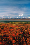 Denali National Park, AK, USA<br /> Mt. McKinley and the Alaska Range<br /> from the Wonder Lake area.<br /> Fall Colors, Blueberries on the tundra.<br /> McKinley River Bar, Turtle Hill.