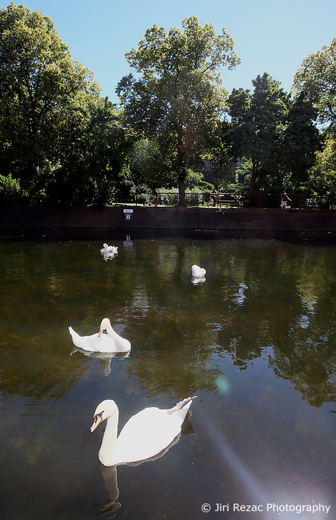 UK ENGLAND LEICESTER 30JUN15 - Swans on  the river Soar at Leicester city.<br /> <br /> jre/Photo by Jiri Rezac / WWF UK<br /> <br /> © Jiri Rezac 2015