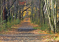 Foot and bicycling path in the Institute Woods, Princeton, NJ