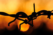 Barbed wire at sunset in Sahuarita, Arizona, USA.