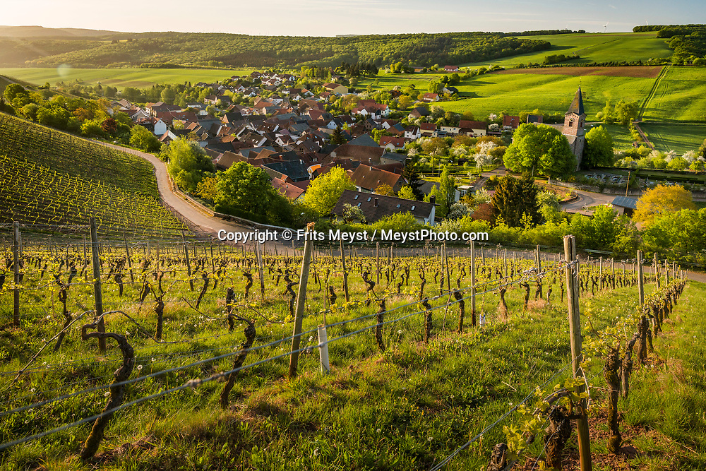 Kirschroth, Nahetal, Germany, May 2018.  Sunrise over the vineyards of Kirschroth. The Nahe region is named after the river that traverses the valleys of the forested Hunsrück Hills as it flows towards the Rhine. A landscape of vineyards, orchards and meadows interspersed with cliffs and striking geological formations. Photo by Frits Meyst / MeystPhoto.com