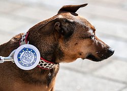 """© Licensed to London News Pictures. 07/10/2018. London, UK. Darcy stands with her pro-remain owner on march to Parliament to demand a """"People's Vote"""" on the final Brexit agreement.  Photo credit: Peter Macdiarmid/LNP"""
