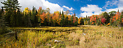 Brightly coloured Maples form the backdrop to this panoramic image of a small wetland alongside the Glamorgan Road.
