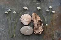 Clam shell fossil with driftwood, stone and wild Buckwheat blossoms.