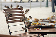 a large group of sparrows eating food remains of a table