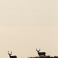 missouri river country, montana, usa, summer, montana high plains, eastern montana, charlie russel wildlife area