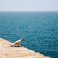 Graphic, simple, colorful image of a landed pigeon looking at the sea.